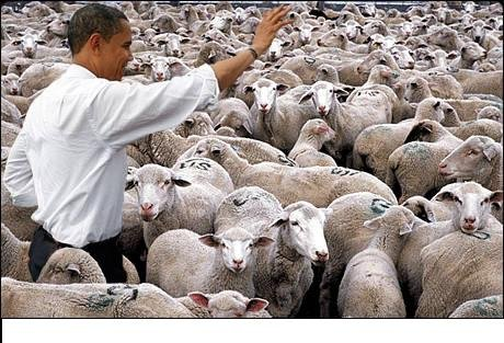 obamas blind sheep